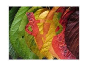 Farby lístia na jeseň
