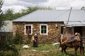 A woman collects and dries medicinal plants in the town of Shishtavec, Albania. She now lives alone. Everyone else who lived in the house have left for Germany. [Elie Gardner/ DER SPIEGEL]