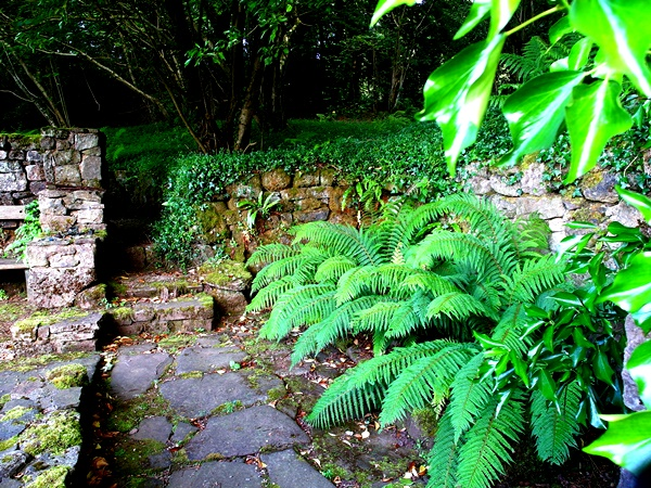 Ferns in Ruin  Veddw, copyright Anne Wareham SAM_2156 S