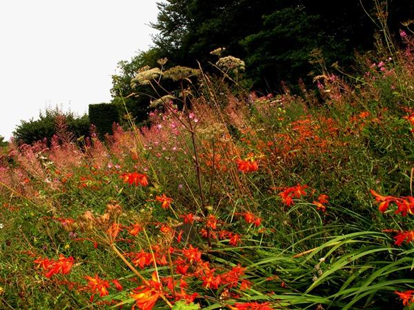 Wild garden, Veddw mid August copyright Anne Wareham 164
