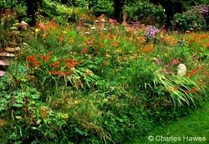 Wild Garden at Veddw, copyright Charles Hawes