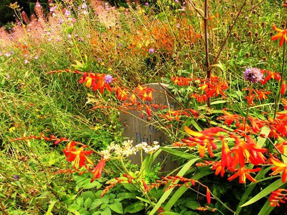 Wild Garden, Veddw, in August Copyright Anne Wareham