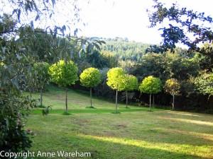 Meadow at Veddw garden, Monmouthshire copyright Anne Wareham