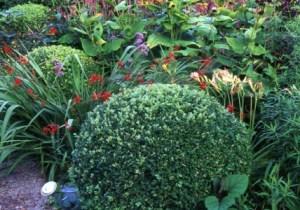 Box Ball, front garden, Veddw, copyright Charles Hawes