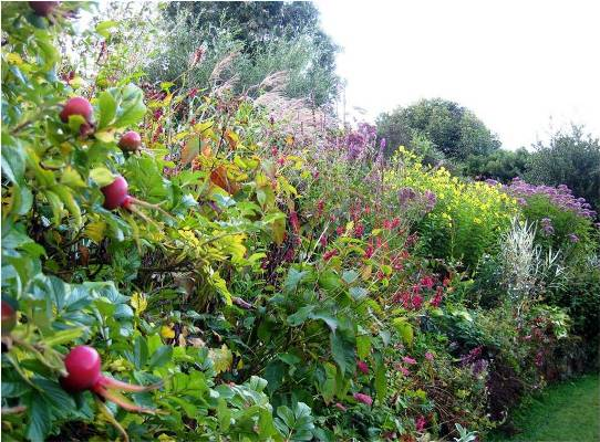 Crescent Border, late summer at Veddw copyright Charles Hawes