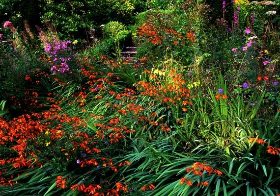 Wild Garden at Veddw copyright Charles Hawes