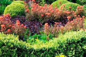 Front Garden, Veddw copyright Charles Hawes