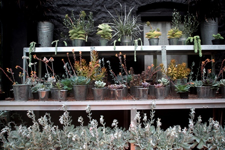 Conservatory Veddw - succulents on bench copyright Charles Hawes