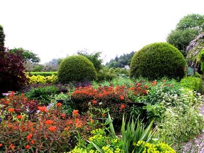 Front garden early June Veddw copyright Anne Wareham