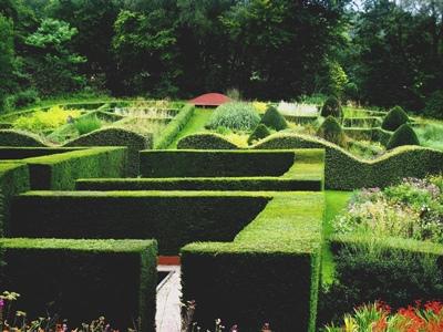 Grasses Parterre Veddw September 2012 copyright Anne Wareham