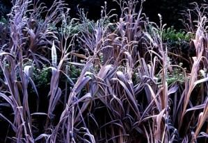 Winter foliage, Veddw, copyright Charles Hawes