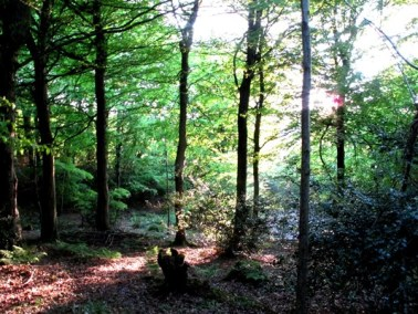 evening light in the woods, Veddw, copyright Anne Wareham