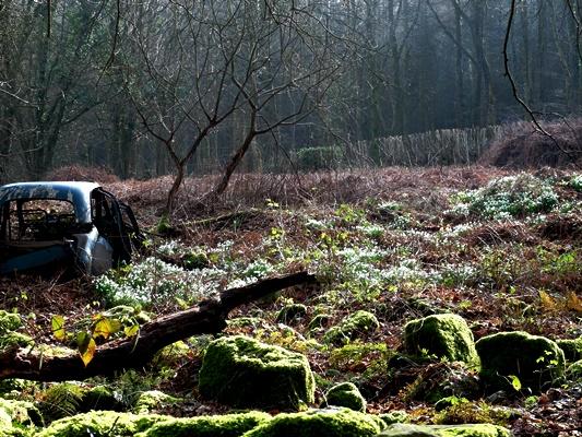 Veddw Woods Copyright Anne Wareham