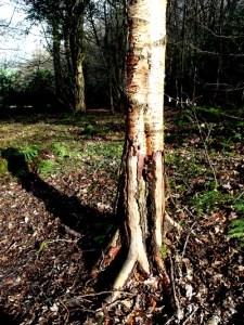 Veddw Woods, Copyright Anne Wareham