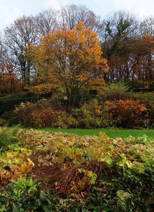 Sorbus autumn Veddw Copyright Anne Wareham