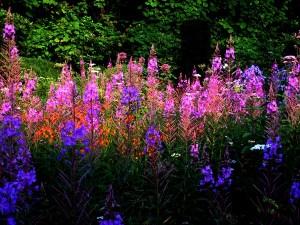 Wild Garden Veddw copyright Anne Wareham I