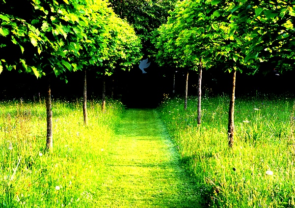 Meadow, Veddw. 1 with Turkish hazel late season
