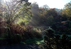 sorbus-lit-at-veddw-copyright-anne-wareham-