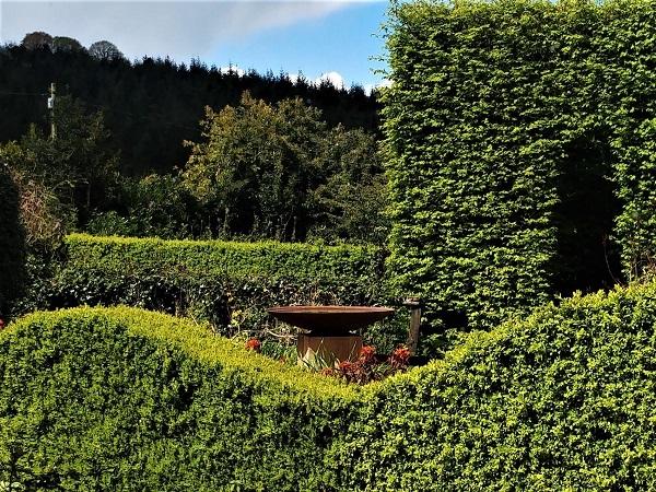 April 2017 Feb 2017 Front Garden, Veddw copyright Anne Wareham