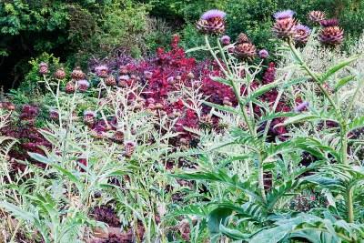 Veddw-House-Garden-september-2015-4