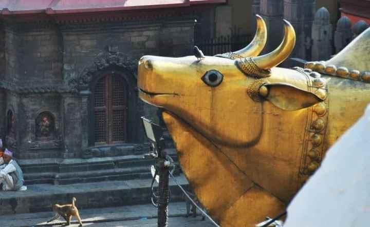Golden Nandi at Pashupatinath Temple
