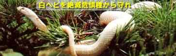■ 白ヘビを絶滅から救え(治療から予防への発想転換)