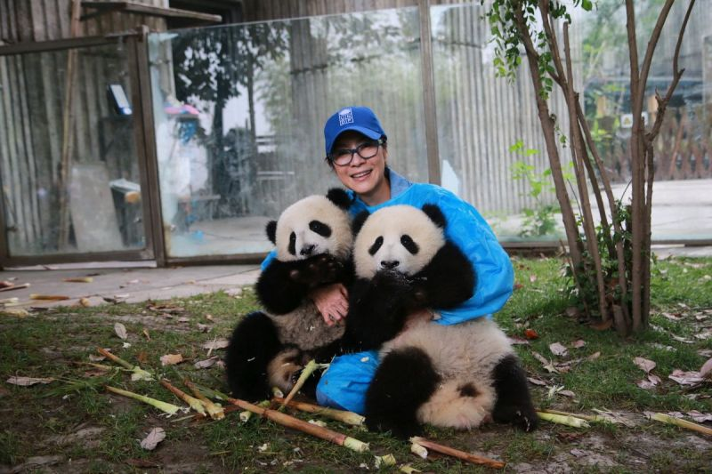 UNDP X Real Image Media: Get a Close-Up of UN's First Panda Ambassadors in Virtual Reality