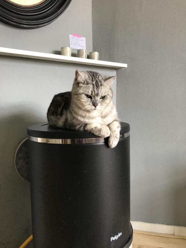 kat op gaskachel