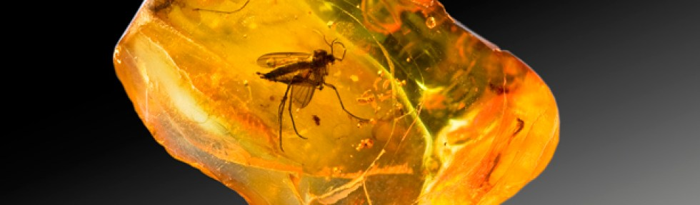 insecto-piedra-ambar