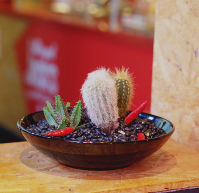 Cactus at Illegal Jacks, Edinburgh