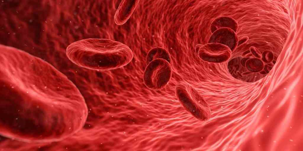 Image of blood flowing through a blood vessel.