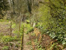 Biotopgarten April 2015 - Scharbockskrautzeit