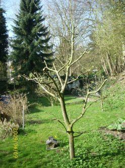 2009 Hausgarten bei Cuxhaven (Nordsee)