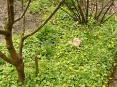 Lebendmulch unter der Baumscheibe