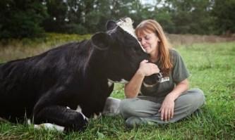 10 Πράγματα Που Θα Αγαπήσετε Στις Αγελάδες!