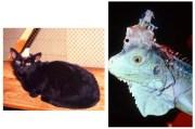 Ζώα Στην Έρευνα: Κακοποίηση Kαι Πόνος.