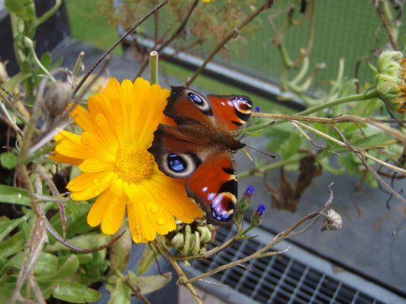 Gartenjahr 2012
