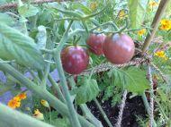 Tomaten #2