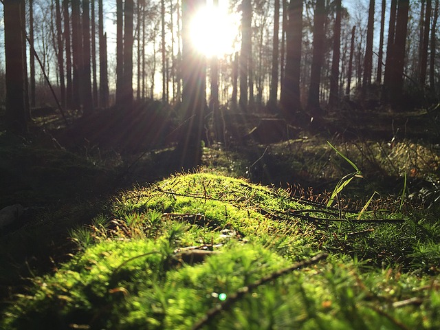 Sun on forest floor