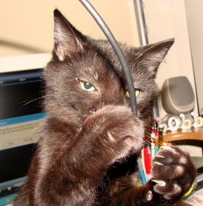 Cat and wires
