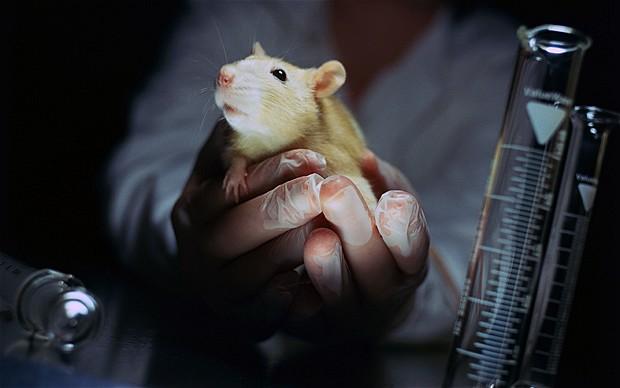Állatkísérlet