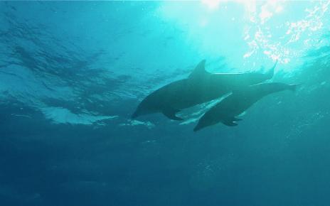 delfinek a tengerben