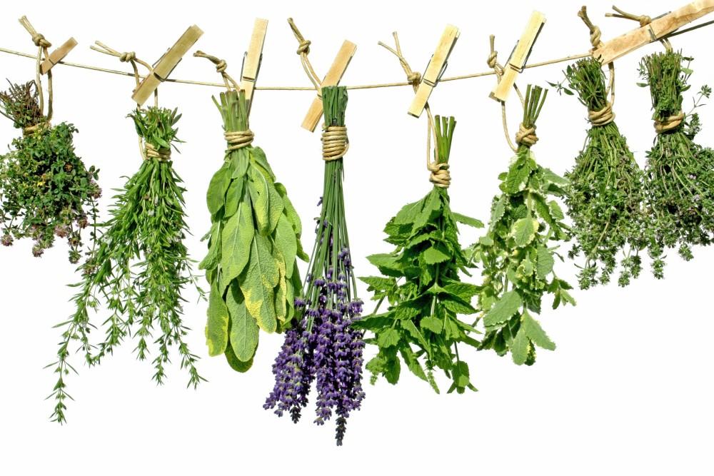 Gyógynövények fellógatva szárítása