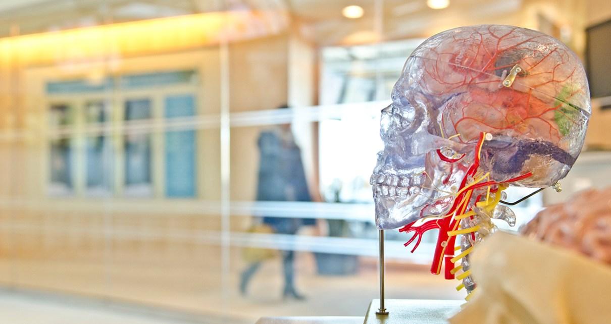 """""""Paleolit"""" étrend volt-e a paleolitikumban? - Új kutatások az emberi agy növekedéséről"""