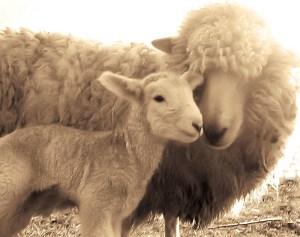 lana veganism.es