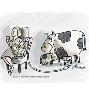 cow abuse