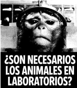 experimentación animales-de-laboratorio