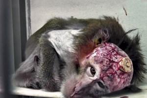experimentación animales laboratorio