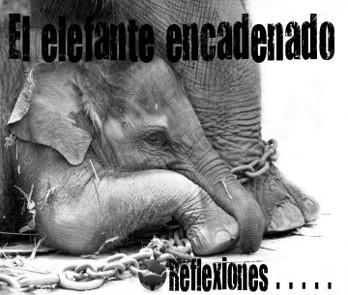 elefante en circo