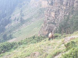 Faja de las Flores. Clavijas de Cotatuero. Parque Nacional de Ordesa-Monte Perdido